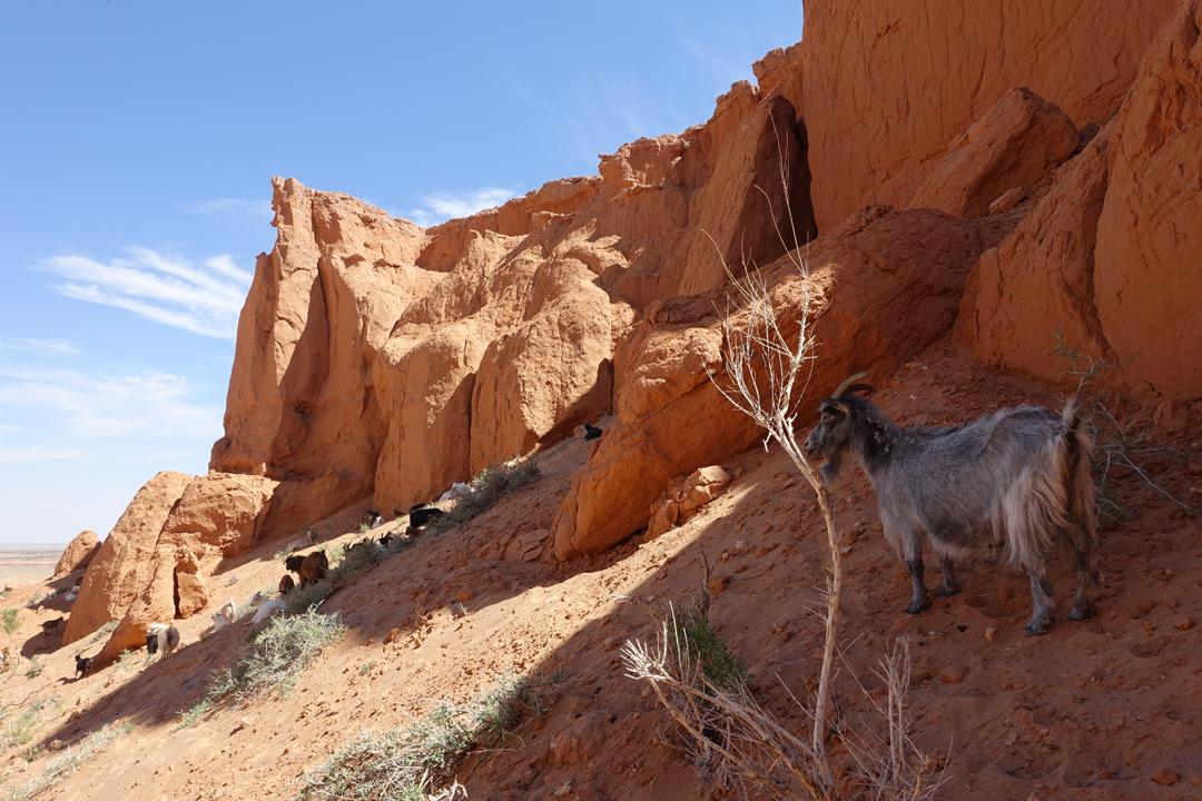 Gobi Desert Tour – Bayanzag (Flaming Cliffs)