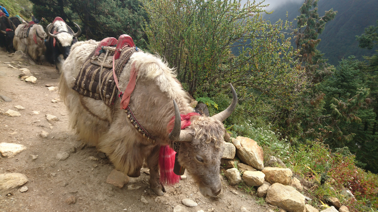 Everest Base Camp and Gokyo Lake Trek – Day 4 – Khumjung to Tengboche