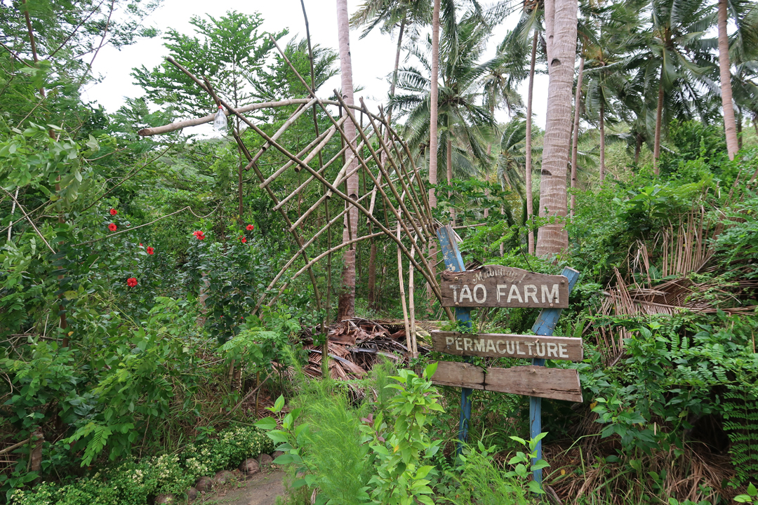 Tao Expedition – Day 3 – An adventurous journey to TAO farm